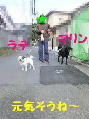 e0222588_17252728.jpg