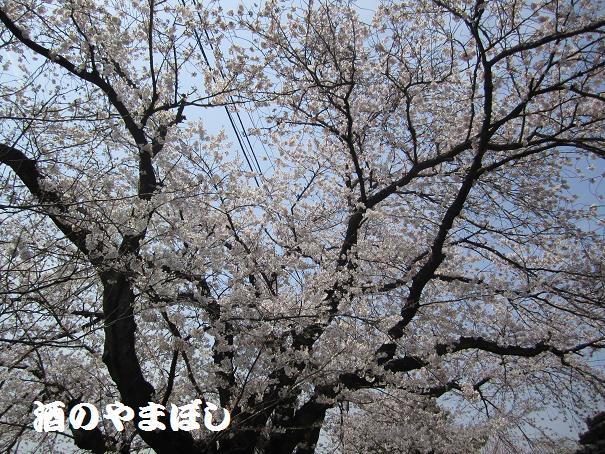 a0056521_140537.jpg