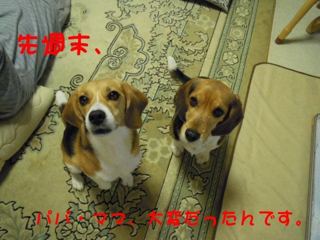 c0166622_20122679.jpg