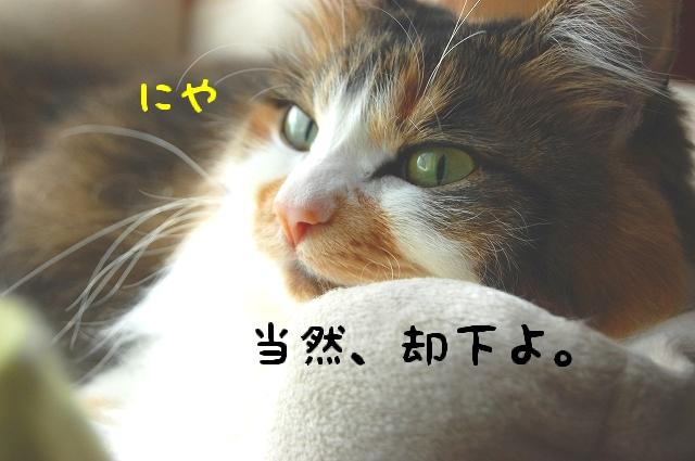 c0181639_0112459.jpg