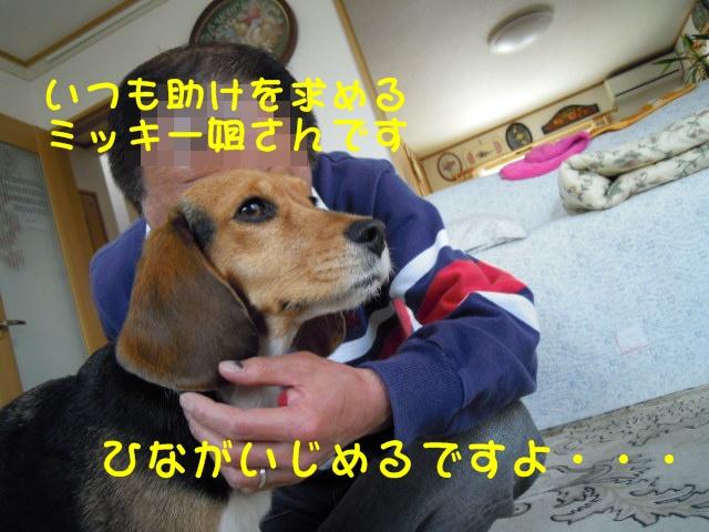 c0166622_14323525.jpg