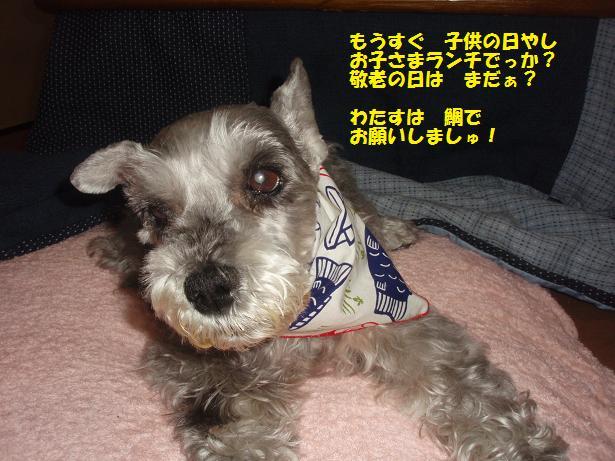 c0098501_20114734.jpg