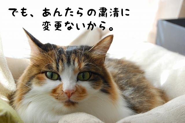 c0181639_09646.jpg