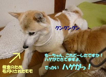 a0154801_921499.jpg