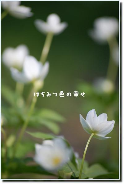 a0114514_2084593.jpg