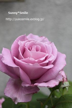 c0178855_18273113.jpg