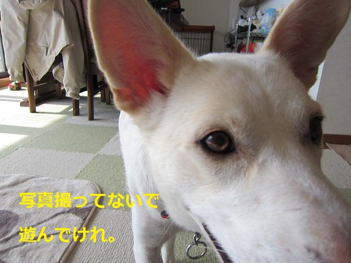 a0132275_1644471.jpg