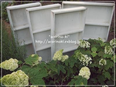 e0245020_550533.jpg