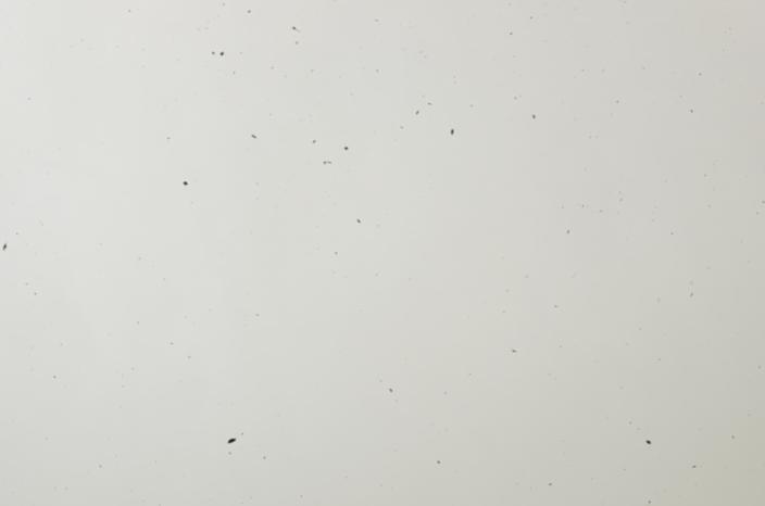 a0263952_1953357.jpg