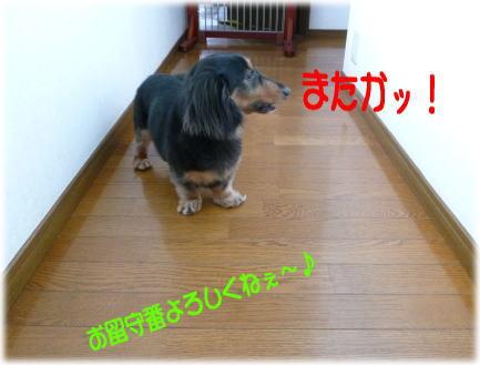 c0058727_5371876.jpg