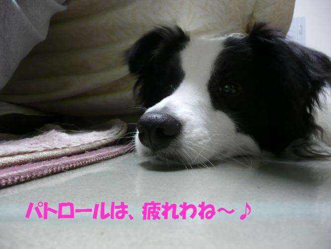 c0147241_216872.jpg
