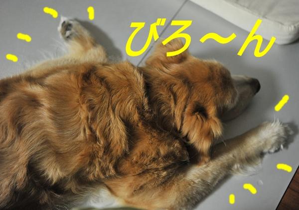 e0020166_2011234.jpg