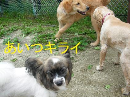 c0049339_2014387.jpg
