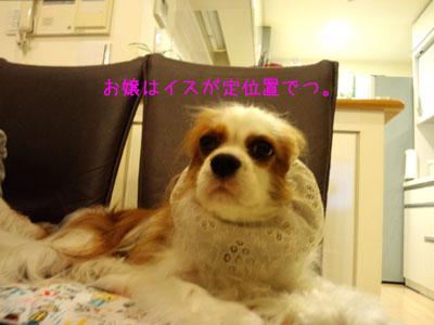 a0120944_16445136.jpg