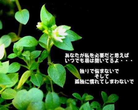a0104940_2573337.jpg