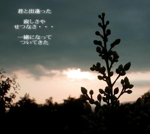 a0104940_328246.jpg