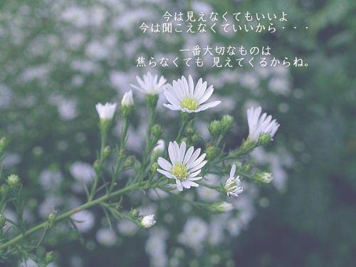 a0104940_34134.jpg