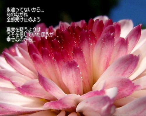 a0104940_358772.jpg
