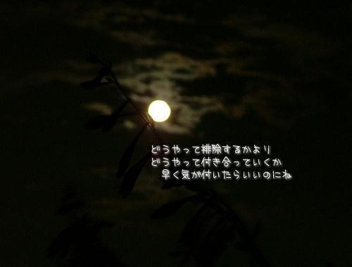a0104940_4241597.jpg
