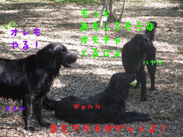 c0237824_2344576.jpg
