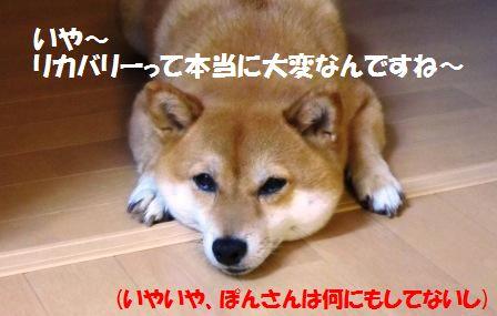 c0171368_2032298.jpg