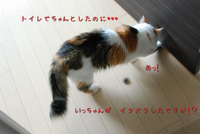 a0266372_2082064.jpg