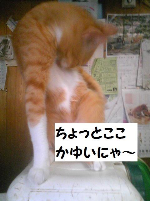 a0232197_1756937.jpg