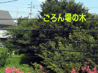 c0211810_17565384.jpg