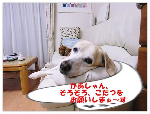 a0197911_1511975.jpg