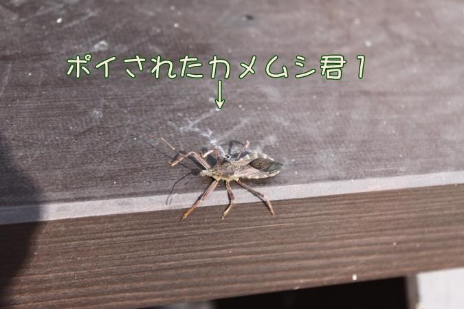 c0117597_1850257.jpg