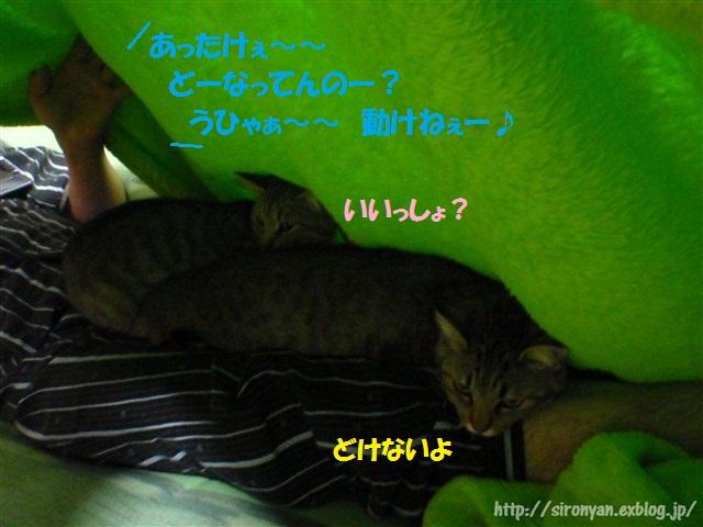 a0159490_16401550.jpg