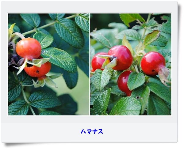 c0051107_10473357.jpg