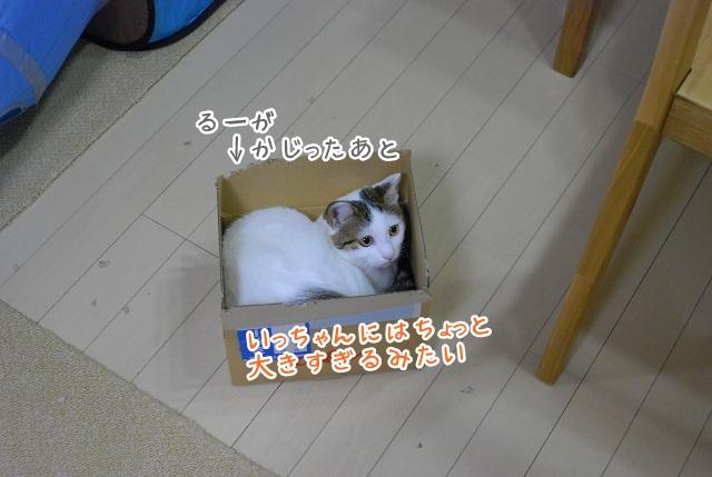 a0266372_1782243.jpg
