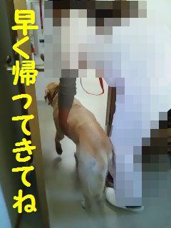 e0222588_1722055.jpg