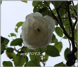 e0232963_20122037.jpg
