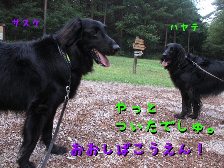 c0237824_23485112.jpg