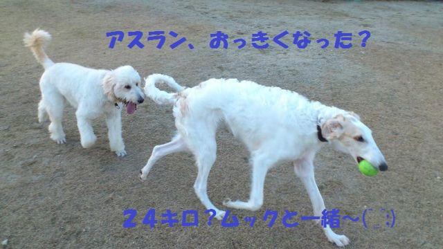 c0254426_0503464.jpg