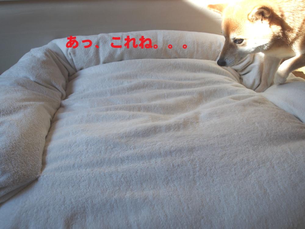 e0131506_1619059.jpg