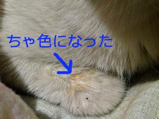 c0211810_9111679.jpg