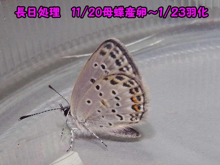 e0253104_2273864.jpg