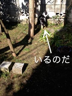 c0211810_10583662.jpg
