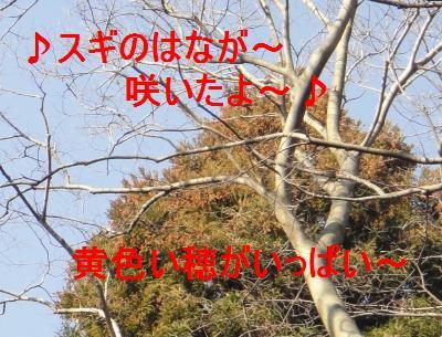 e0195743_16251151.jpg