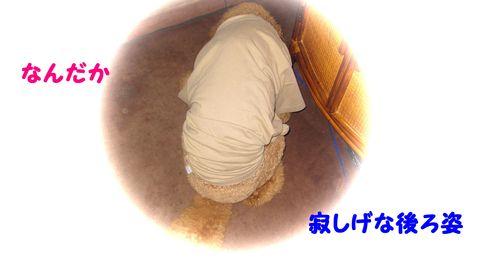 c0283778_1911358.jpg