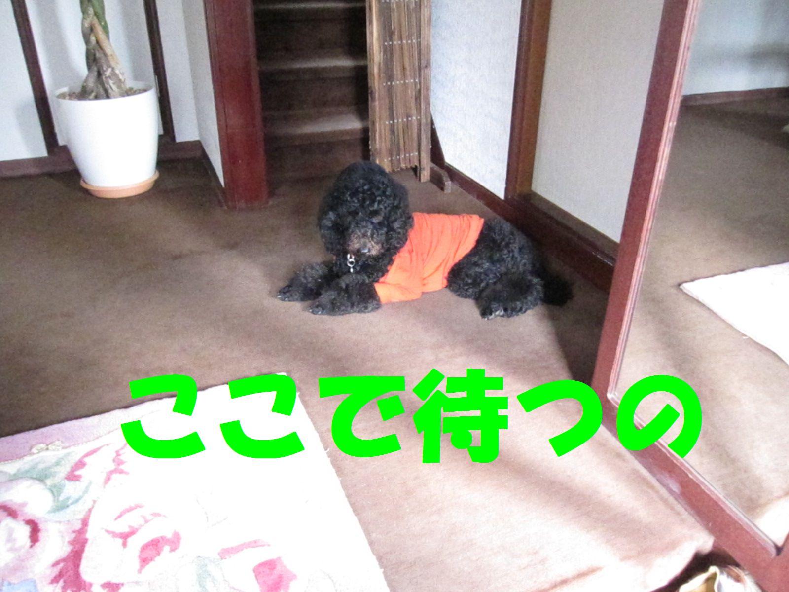 c0283778_181259.jpg