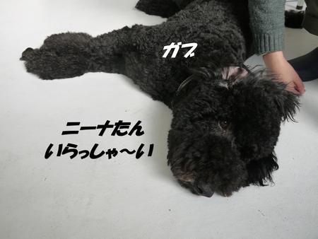 c0283778_1911621.jpg