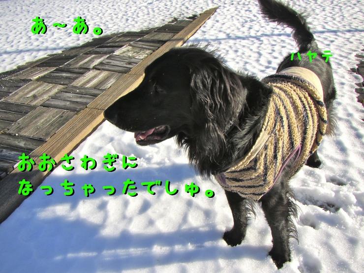 c0237824_940166.jpg