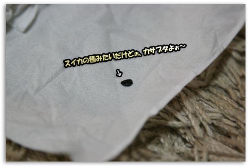 a0086698_1731756.jpg