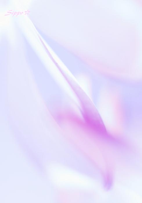 c0195662_2323849.jpg
