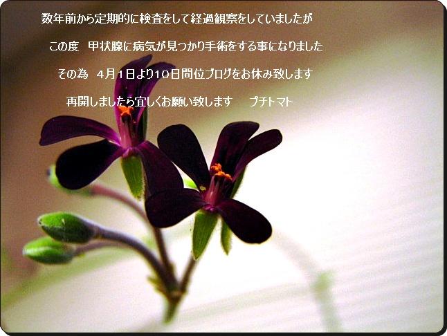 a0126676_12262969.jpg