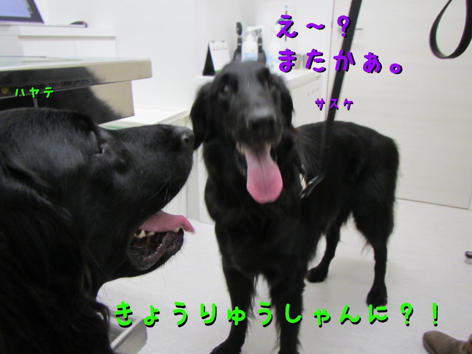 c0237824_9244938.jpg